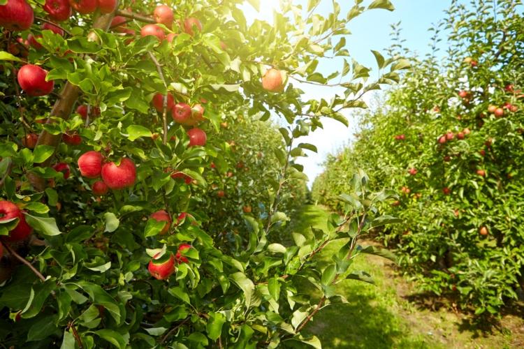La fertirrigazione del frutteto viaggia verso la digitalizzazione