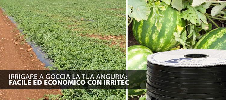 irritec-irrigazione-anguria-2017-jpg