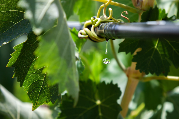 Irrigazione, il bello di non pensarci più