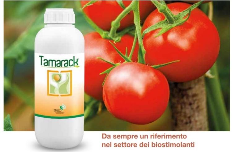 Tamarack by Isagro: aiuta, migliora, aumenta - le news di Fertilgest sui fertilizzanti