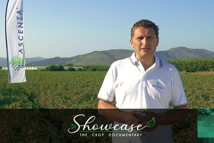 ivan-di-giorgio-ascenza-showcase-pomodoro-da-industria