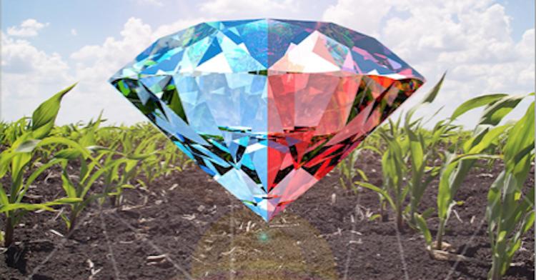 kaltor-mais-diamante-brochure-erbicida-post-emergenza-aprile-2021-rotam