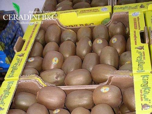 king-kiwi-giallo-ceradini-plateau-actinidia-500-bykingkiwi_com.jpg