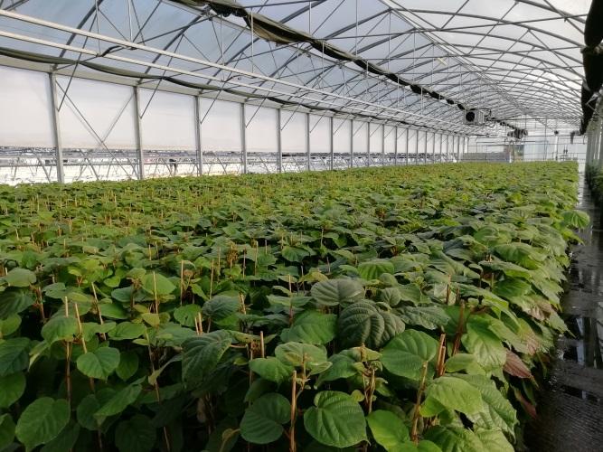 kiwi-boerica-ambiente-protetto-fonte-geoplant-20201027
