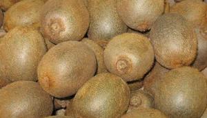 kiwi-frutti-raccolti
