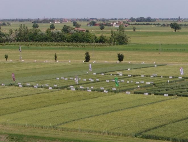ks-agricoltura-concimazione-azotata