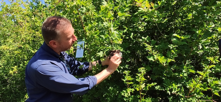 lanci-vespa-samurai-giu-2020-casoli-fitosanitario-modena-e-reggio-emilia-fonte-barbara-righini.jpg