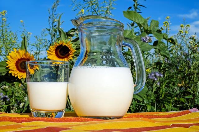latte-girasole-prato-couleur.jpg