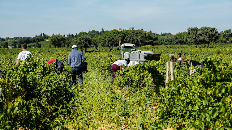 lavoratori-campi-lavoro-stagionale-by-pictures-news-adobe-stock-750x421.jpeg