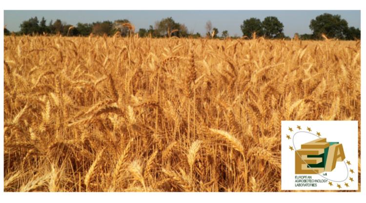 lea-agricoltura-sprint-veg-cereali-2019.png