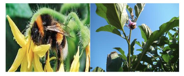 Hortofix: e il raccolto aumenta - le news di Fertilgest sui fertilizzanti