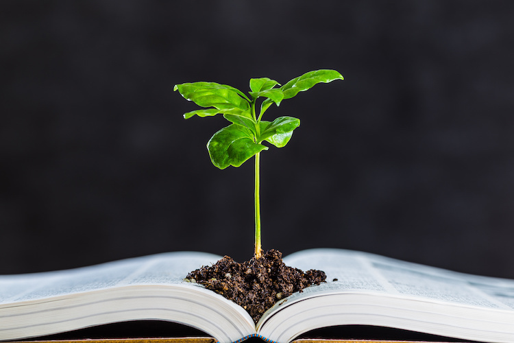 libro-pianta-studiare-universita-by-beeboys-adobe-stock-750x500.jpeg