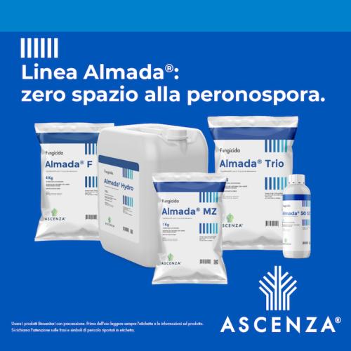 linea-almada-zero-spazio-alla-peronospora-maggio-2020-fonte-ascenza
