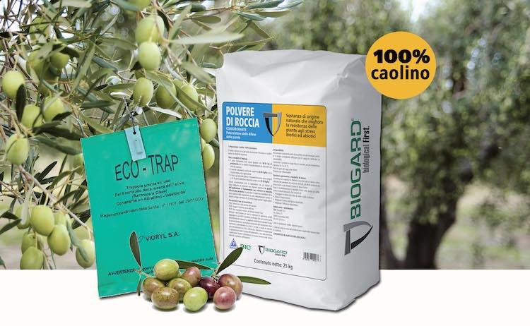 Polvere di roccia, la strategia Biogard contro la mosca dell'olivo - le news di Fertilgest sui fertilizzanti