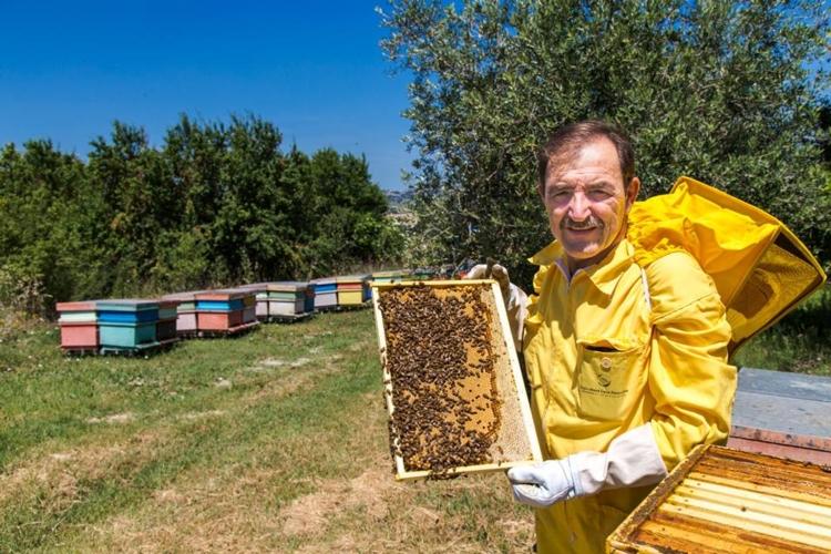 luca-finocchio-apicoltura-apiario-by-luca-finocchio