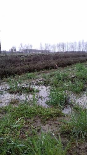 maltempo-danni-imprenditrice-agricola-alice-perini-di-villimpenta-mantova-fonte-coldiretti-mantova.jpg