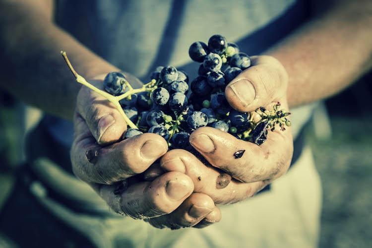 mani-uva-fonte-fico
