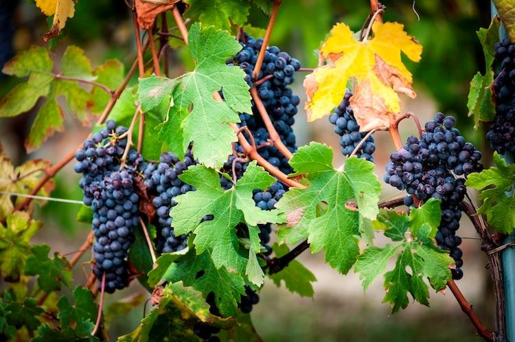 master-vino-photo-credit-marcello-marengo-fonte-food-confidential