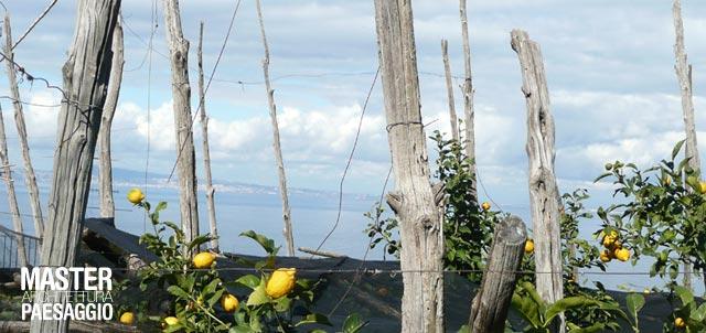 Paesaggi dell 39 agricoltura e turismo sostenibile for Master architettura
