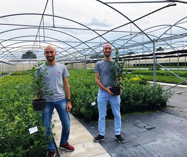 Vivai Molari Berries & Breeding, non solo lamponi - Plantgest news sulle varietà di piante
