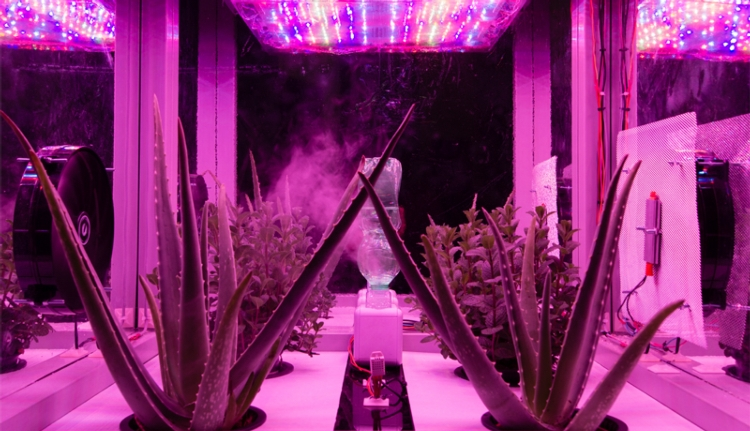 meg-illuminazione-led-fitotrone