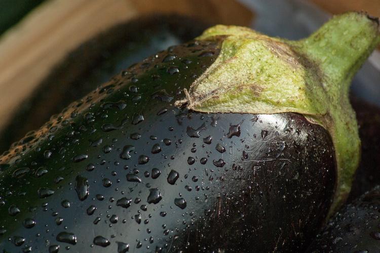 Melanzana, la crisi continua - Plantgest news sulle varietà di piante