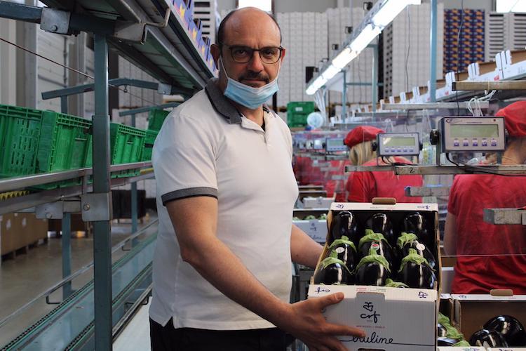 Velia F1, continua la leadership di mercato - Plantgest news sulle varietà di piante