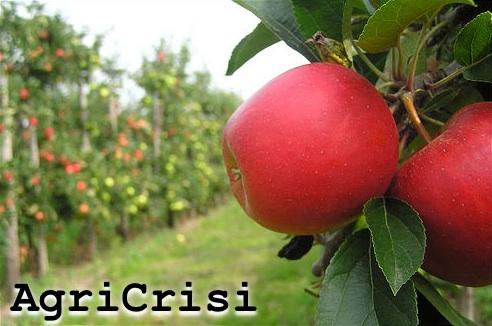 mele-frutteto-agricrisi-byflickrcc20-digicla