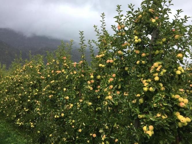 mele-meleti-melo-agronomi-val-di-non-fonte-valagro