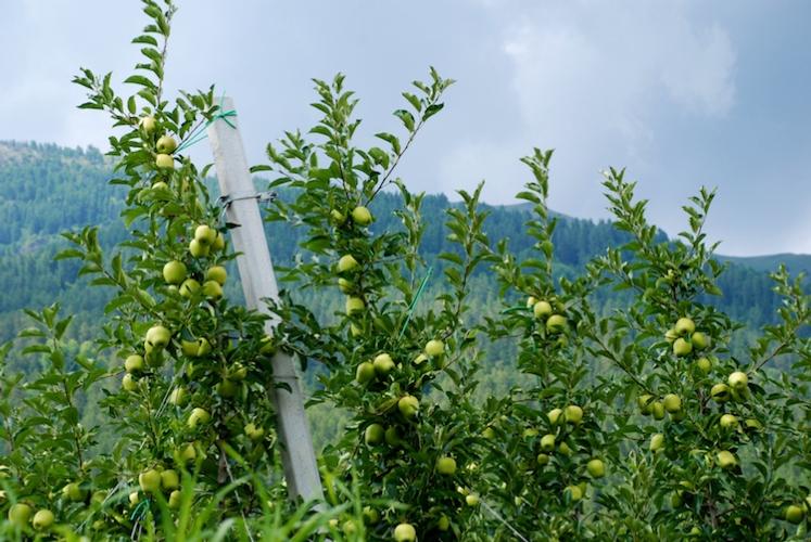 Linee complete verso la redditività - le news di Fertilgest sui fertilizzanti