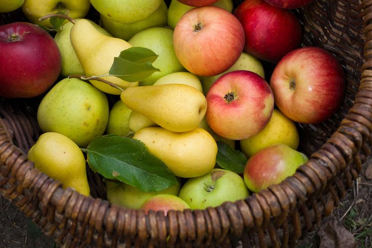 mele-pere-frutta-cesto-by-arinac-adobe-stock-750x500.jpeg