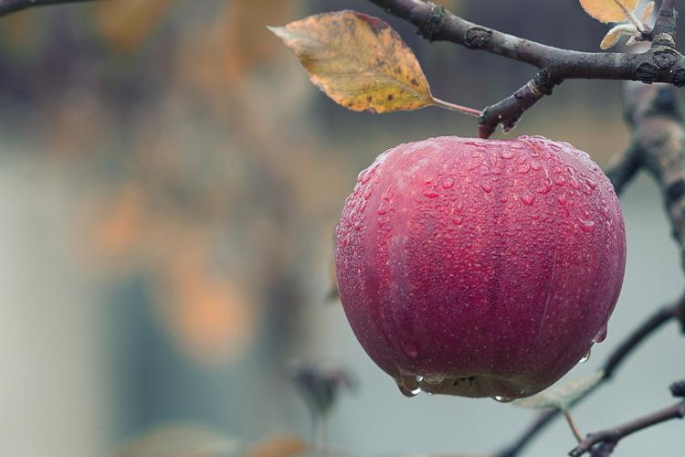 melo-frutto-bymploscar-pixabay-750x500-11225371920.jpg