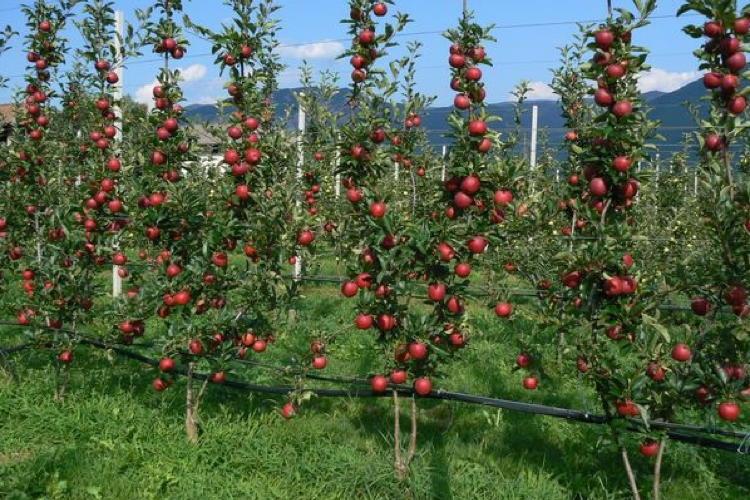 Bibaum la forma d 39 allevamento pi evoluta agronotizie for Potatura del melo