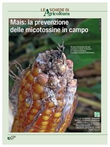 micotossine-prevenzione-campo-linee-guida-e-r-2010-by-agricoltura.jpg
