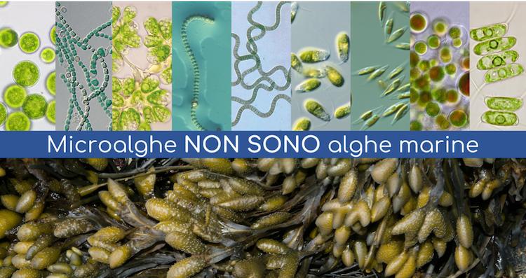 microalghe-non-sono-alghe-febbraio-2020-fonte-agrialgae-algaenergy.png