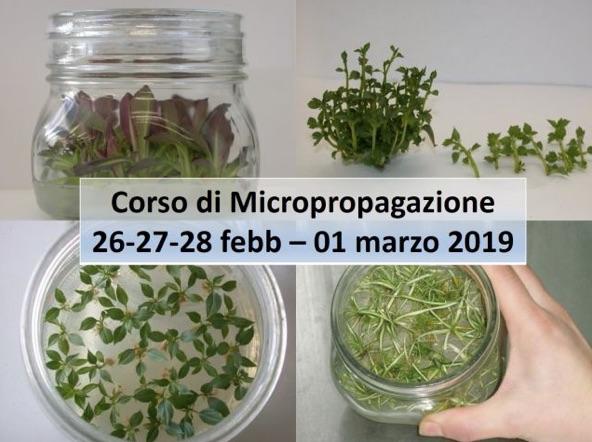 micropropagazione-corso-fritegotto-2019