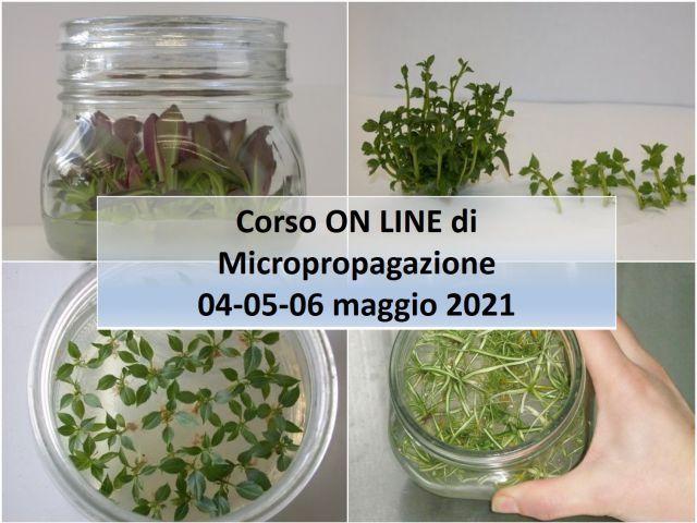 EVENTO ONLINE - Micropropagazione: corso sulla produzione vivaistica con la propagazione in vitro - Plantgest news sulle varietà di piante