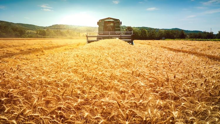 Mietitrebbie: fuoriclasse dell'agricoltura 4.0