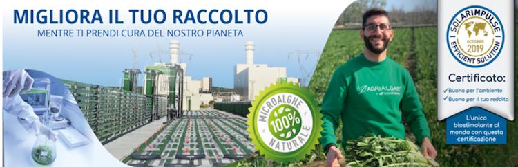 Microalghe, la materia prima ideale per biostimolanti efficaci e sostenibili - le news di Fertilgest sui fertilizzanti