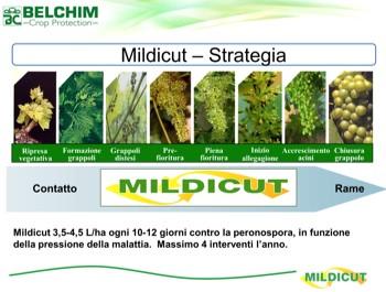 mildicut-0-belchim-peronospora-350