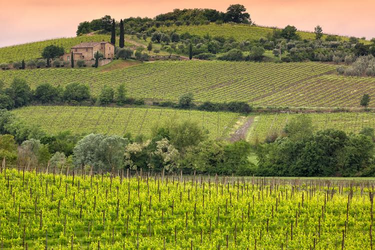 montalcino-toscana-vigneto-vite-collina-by-frank-adobe-stock-750x500