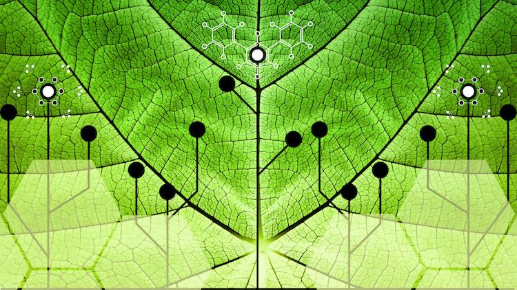 Le piante che non si ammalano, arrivano le biotecnologie per l'agricoltura - Plantgest news sulle varietà di piante