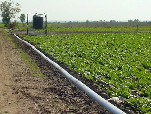 netafim-bietole-irrigazione-a-goccia-2