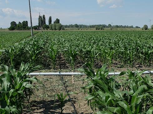 Mais tutti i vantaggi dell 39 irrigazione a goccia for Netafim irrigazione