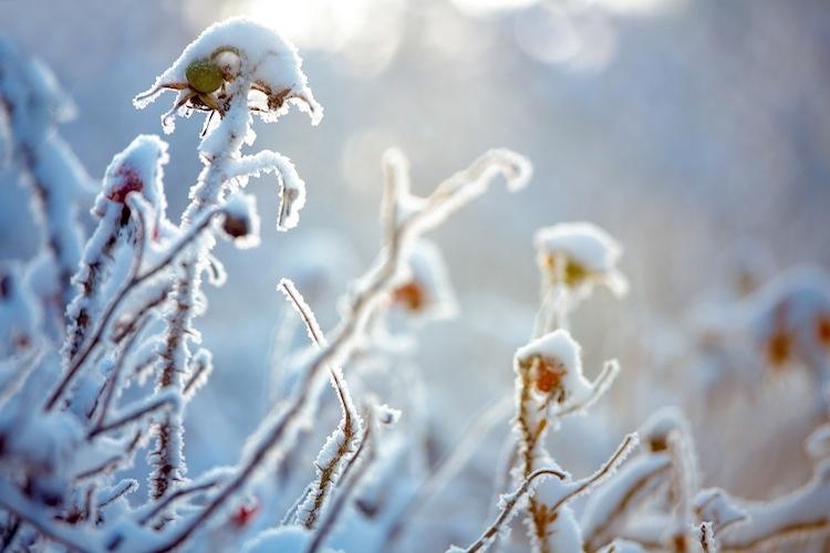 neve-ghiaccio-maltempo-inverno-levranii-fotolia-750x500