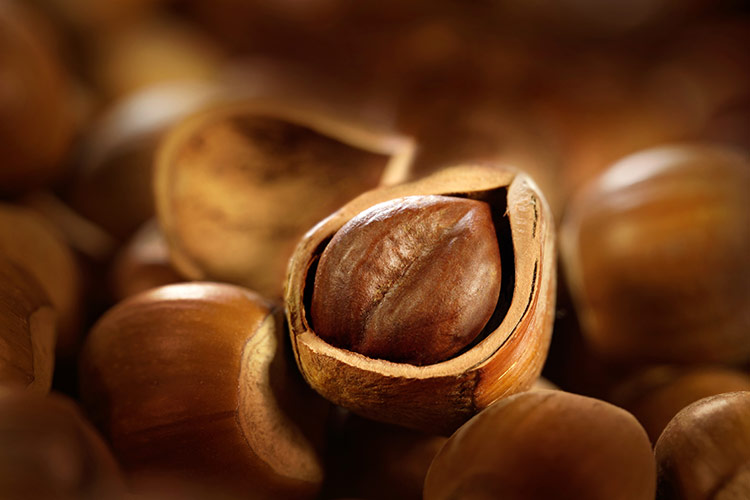 Nocciolo, la varietà conta - Plantgest news sulle varietà di piante