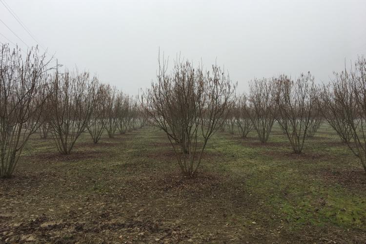 noccioleto-inverno-piemonte-cinquemani-750x500