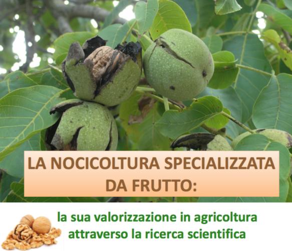 nocicoltura-specializzata-frutto-convegno-incontro-pan-fonte-regione-veneto1