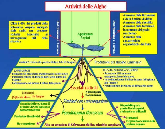 npk-chem-bioatlantis-attivita-alghe.jpg