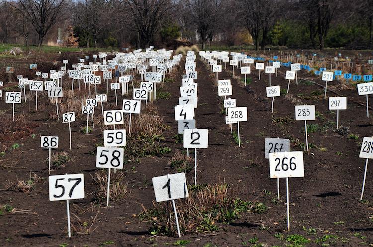 numeri-agricoltura-cartellini-by-evgeny-govorov-fotolia-750.jpeg